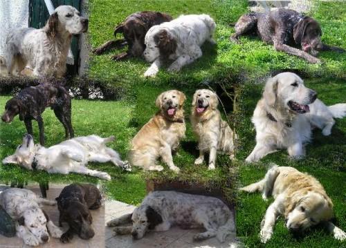 montage chiens.jpg