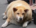 chien gros.jpg