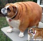 fat_dog.jpg